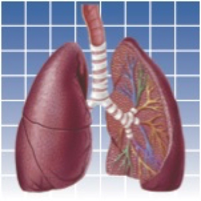 Lungs Icon copy